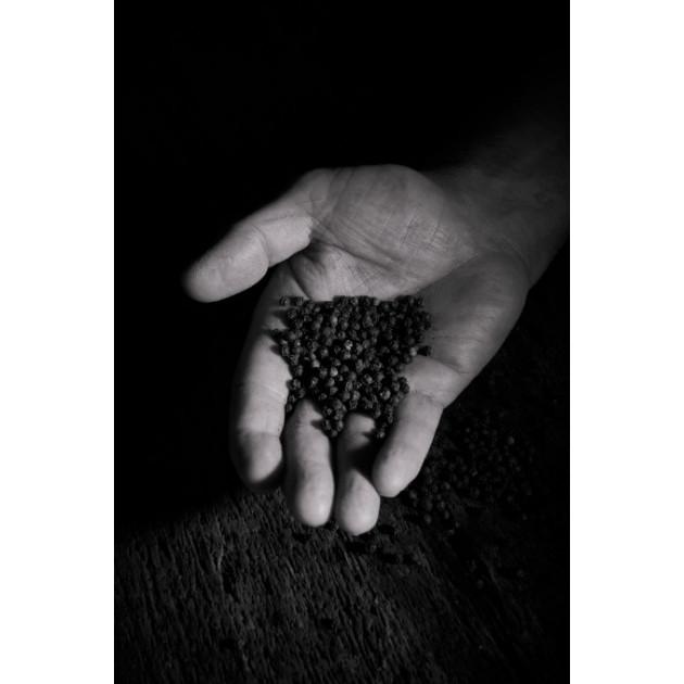 Poivre Noir pour moulin Peugeot