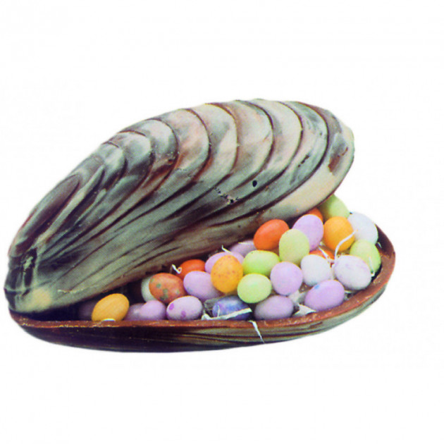Moule a Chocolat Coquillage 14.6 cm