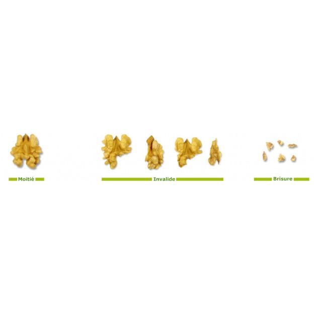 Comparatif Formes Cerneaux de Noix
