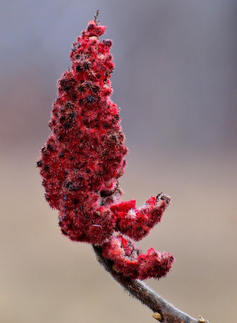 Fleur de Sumac
